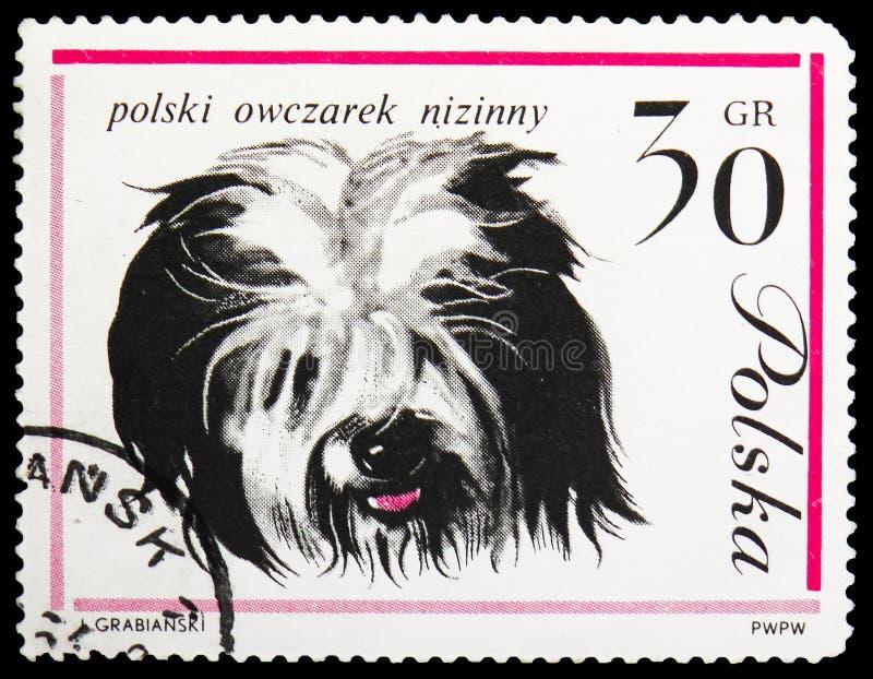 Polski Niżowy Sheepdog, psa seria około 1963, zdjęcie royalty free