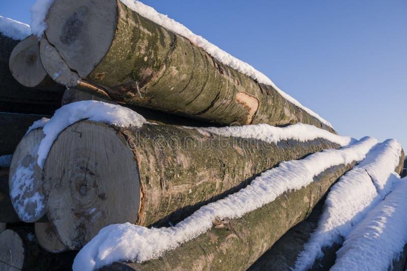 Polter a empilé les troncs d'arbre abattus en hiver avec la neige, su intelligent image libre de droits