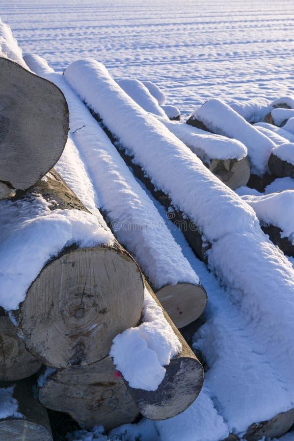 Polter, gefällte Baumstaplungsstämme im Winter Querschnitt mit stockbild