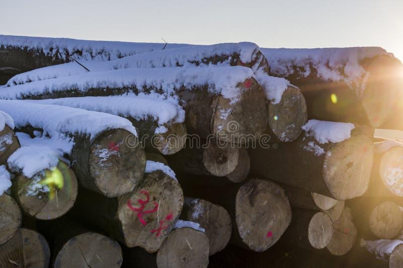 Polter, gefällte Baumstaplungsstämme im Winter Querschnitt mit lizenzfreie stockfotografie
