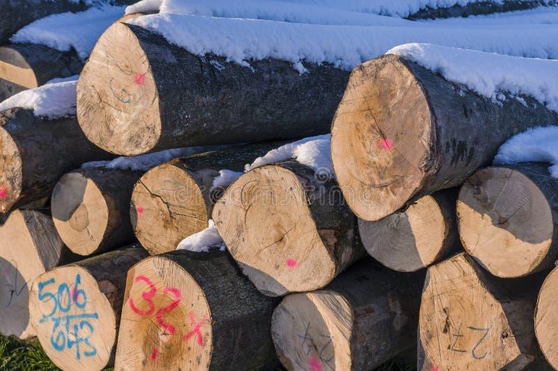 Polter stapelte gefällte Baumstämme im Winter Querschnitt mit lizenzfreies stockbild