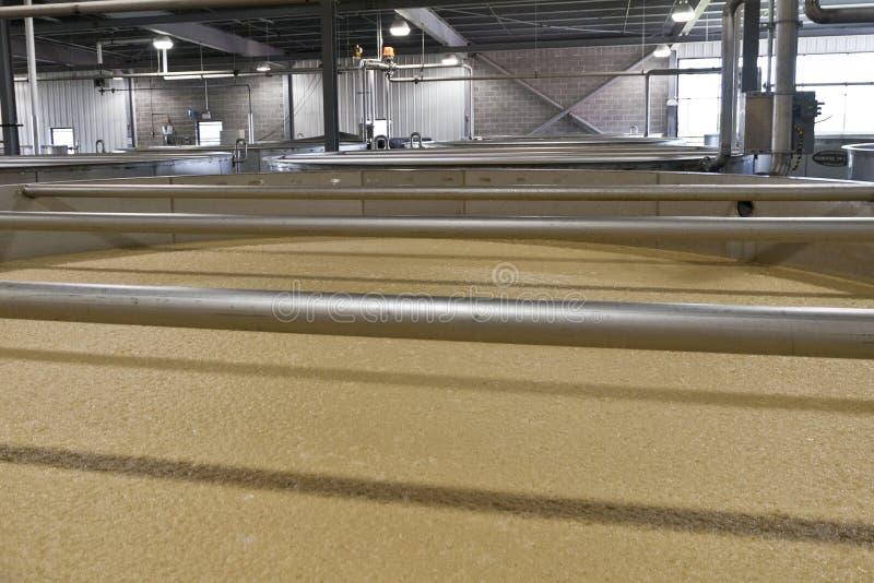 Poltiglia del cereale del Bourbon che fermenta nella distilleria immagini stock