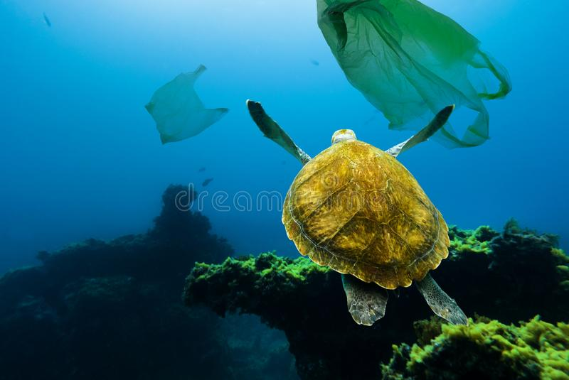 Poluição subaquática Tartaruga subaquática que flutua entre sacos de plástico fotografia de stock