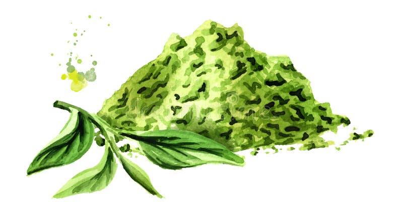 Polvere del tè di Matcha con le foglie di tè verdi Illustrazione disegnata a mano dell'acquerello, isolata su fondo bianco illustrazione vettoriale