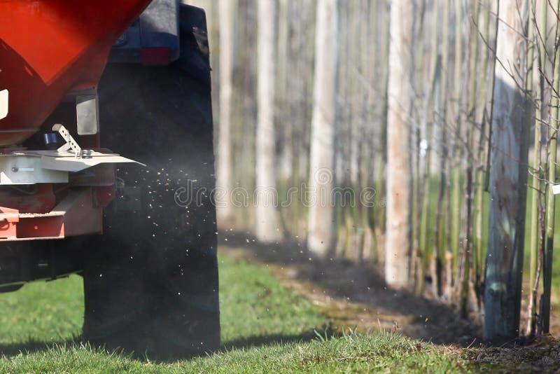 Polvilhe o fertilizante às árvores novas fotografia de stock