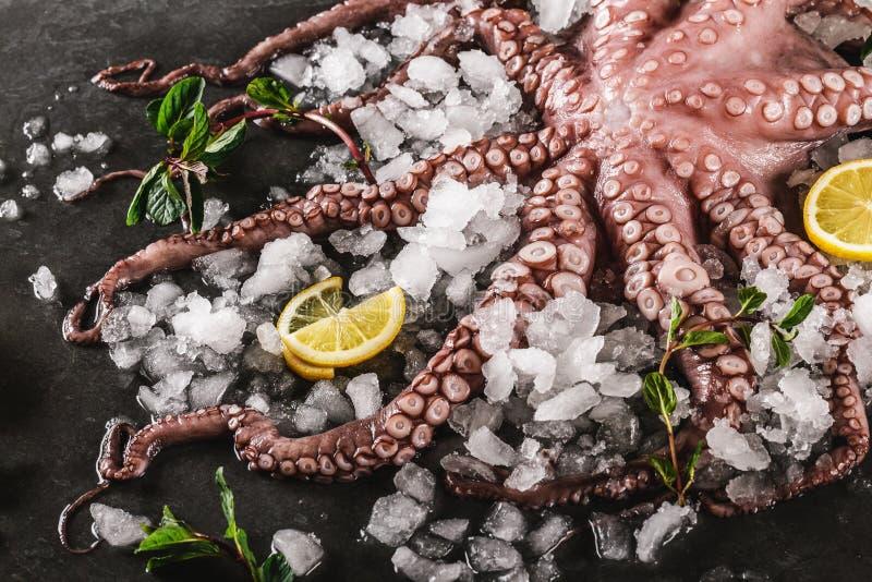 Polvo cru fresco inteiro com especiarias e limão no gelo, fundo da pedra da ardósia Polvo do marisco, vista superior, configuraçã fotos de stock