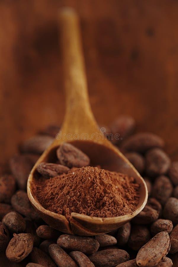 Polvo de cacao en cuchara en backgrou asado de las habas del chocolate del cacao imagen de archivo libre de regalías