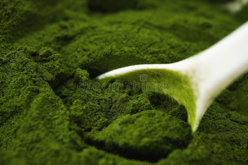 Polvo de la hierba de cebada imagenes de archivo