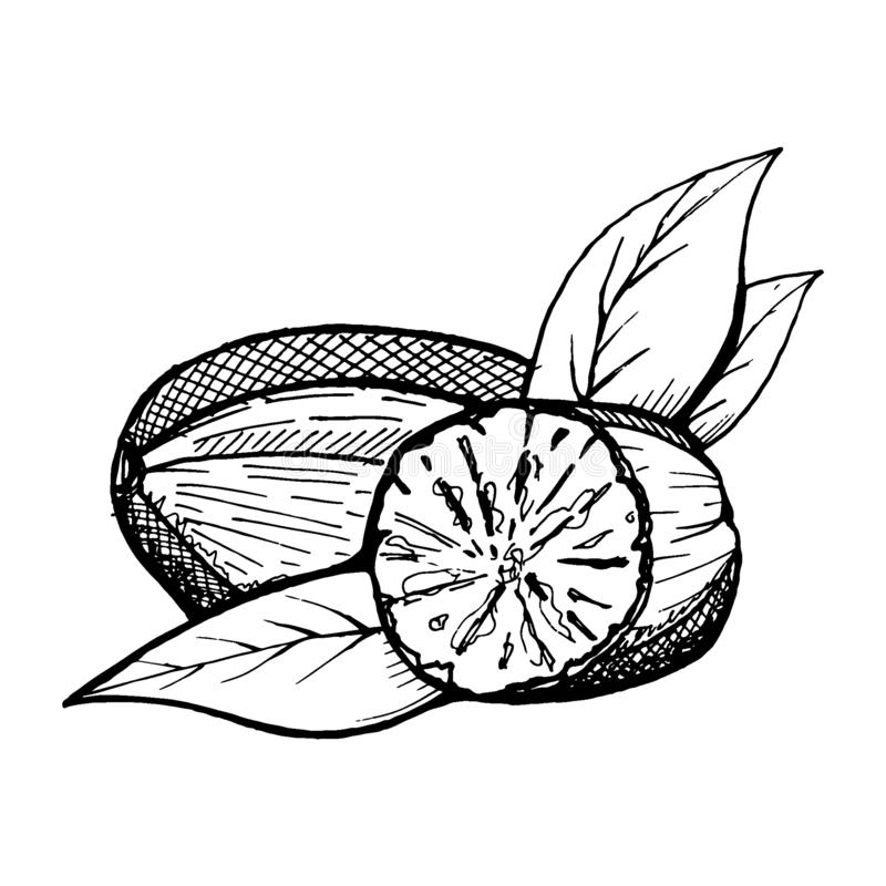Polvo entero y machacado de la nuez moscada moscada Especias aisladas en el fondo blanco Ilustración del vector Puede ser utiliza stock de ilustración