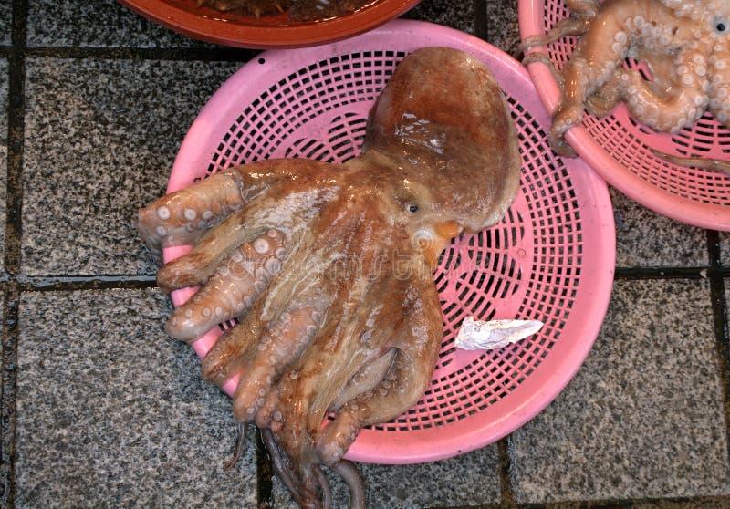 Polvo no mercado de peixes de Jagalchi, Busan, república coreana foto de stock royalty free