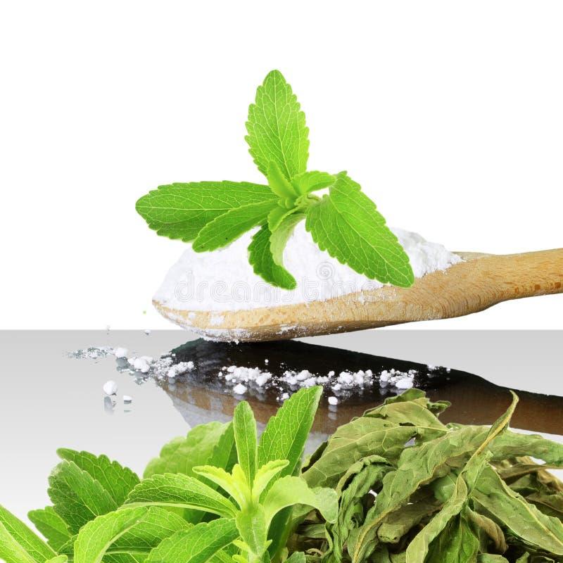 Polvo verde y secado fresco del Stevia y del extracto en el fondo blanco fotos de archivo libres de regalías
