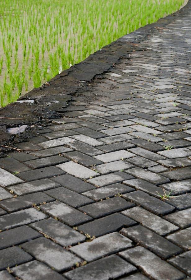 poly ryżowy drogi kamień zdjęcia stock