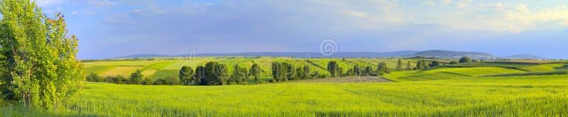 poly zieleni krajobrazu panoramiczni drzewa zdjęcie stock