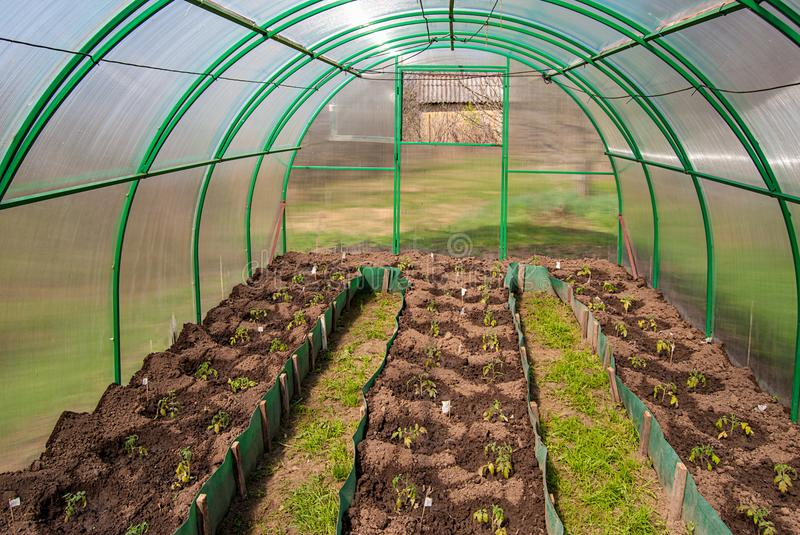 Polycarbonate greenhouse in a private garden with planted tomato seedlings royalty free stock images
