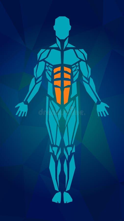Polygonal ανατομία του ανδρικού μυϊκού συστήματος διανυσματική απεικόνιση