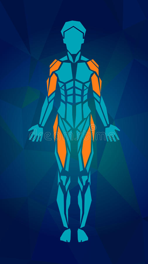 Polygonal anatomy of female muscular system royalty free illustration