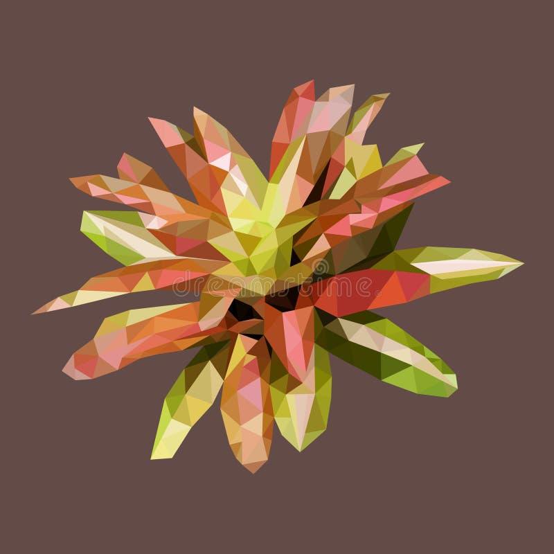 Polygonal bromelia, polygonblomningväxt, vektor stock illustrationer