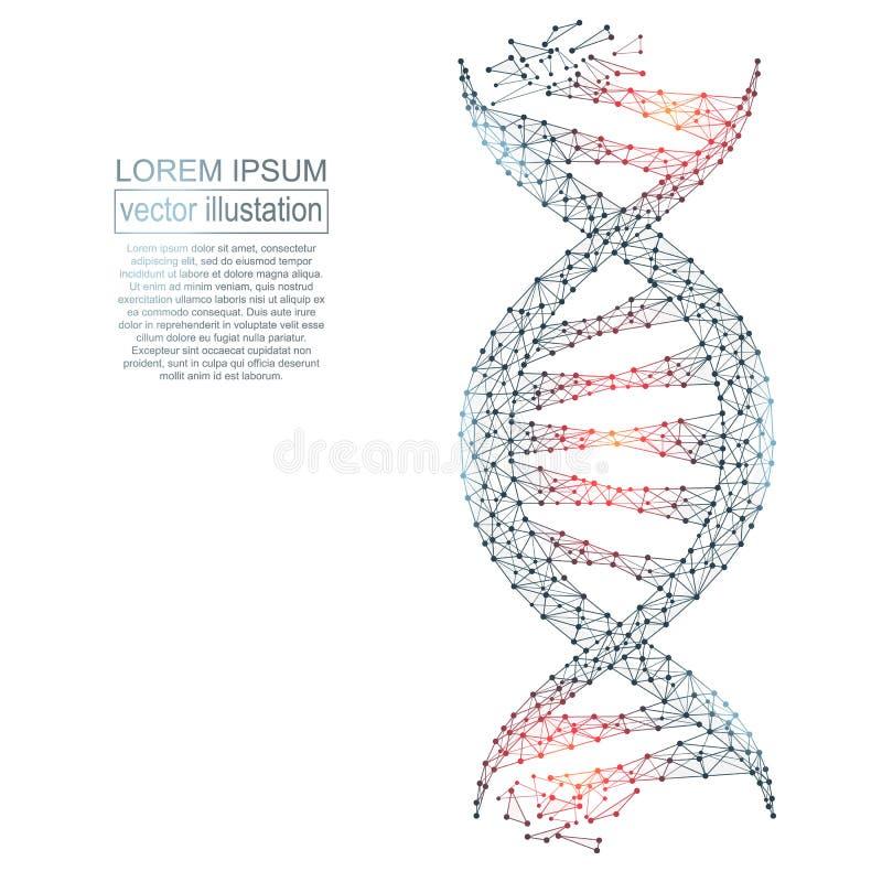 Polygonal DNAabstrakt begreppbild Låg poly wireframe stock illustrationer