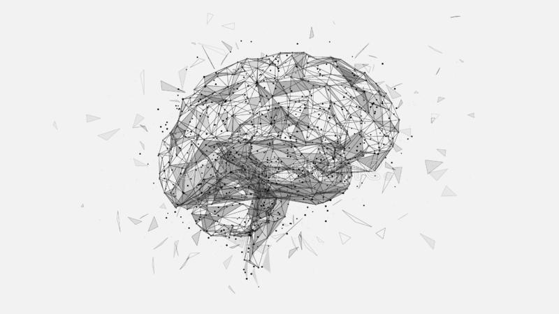 Polygonal human brain illustration on white background. Abstract polygonal human brain. Low poly wire frame mesh vector illustration on white background. Lines royalty free illustration