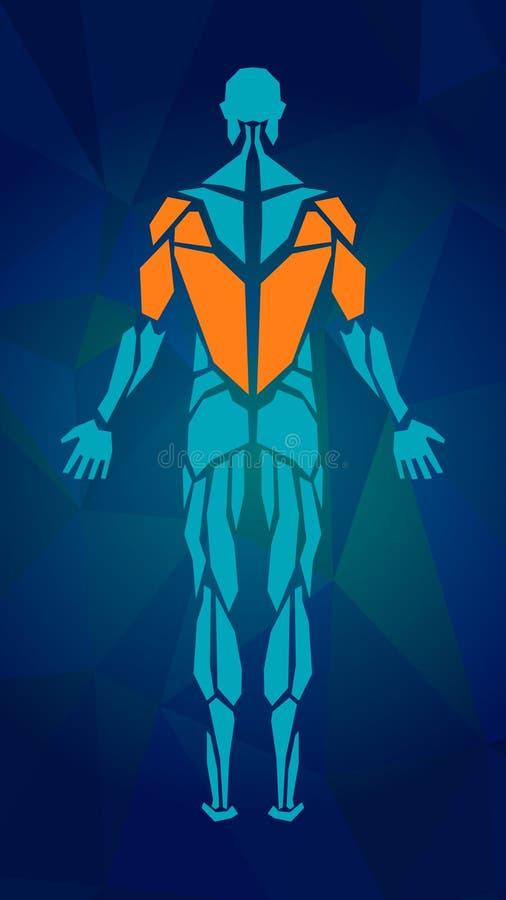 Polygonale Anatomie des männlichen muskulösen Systems stock abbildung