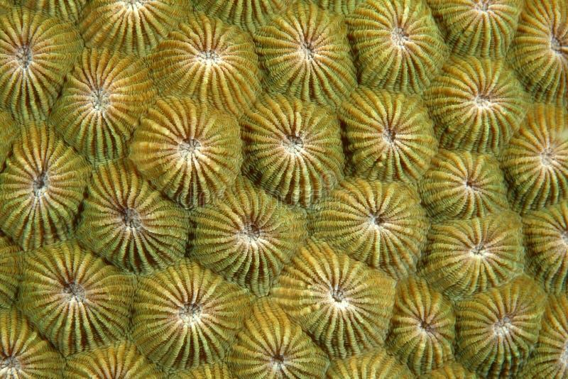 Polyps di corallo immagine stock libera da diritti
