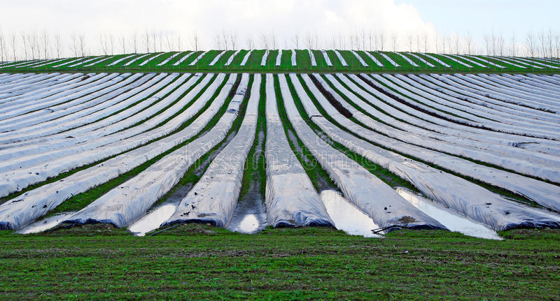 Download Polytunnels Cloches On Farm Stock Image - Image of industry, farming: 38288551