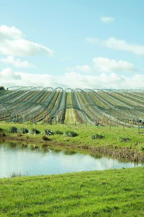 Polytunnels in een de lenteweide in het Engelse platteland stock fotografie