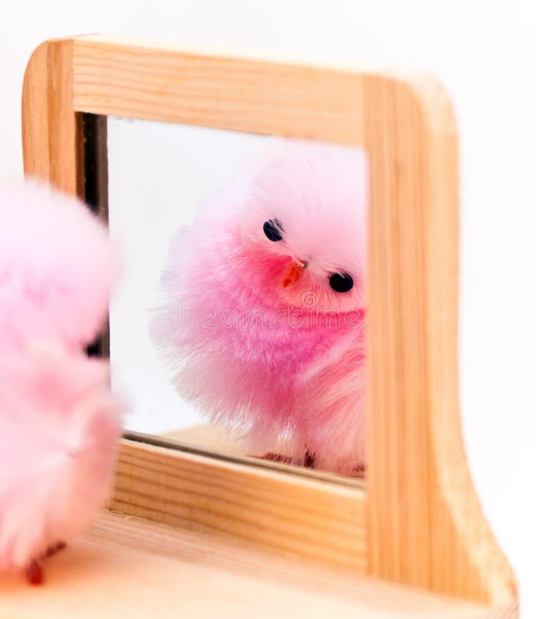 Free Pom Peep Reflection Royalty Free Stock Photo - 24126325