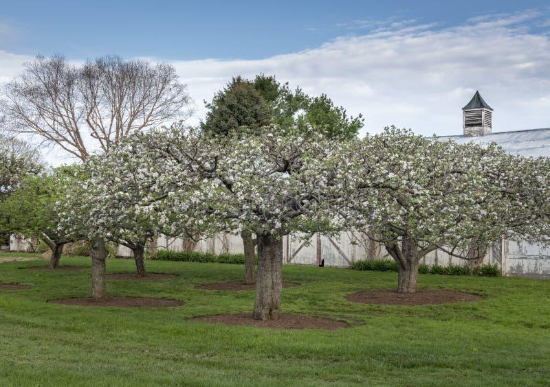 Pomar de Árvore da Maçã no Vale do Hudson foto de stock royalty free