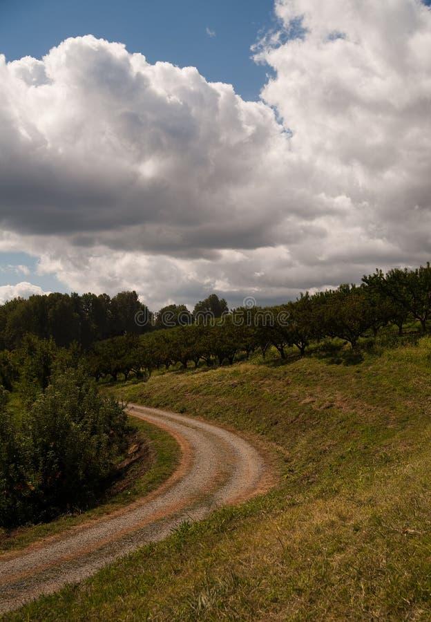 Pomar de Apple com estrada fotografia de stock royalty free