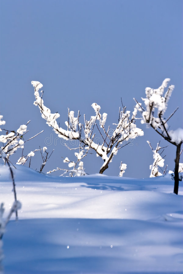 Pomar de fruta no inverno fotografia de stock royalty free
