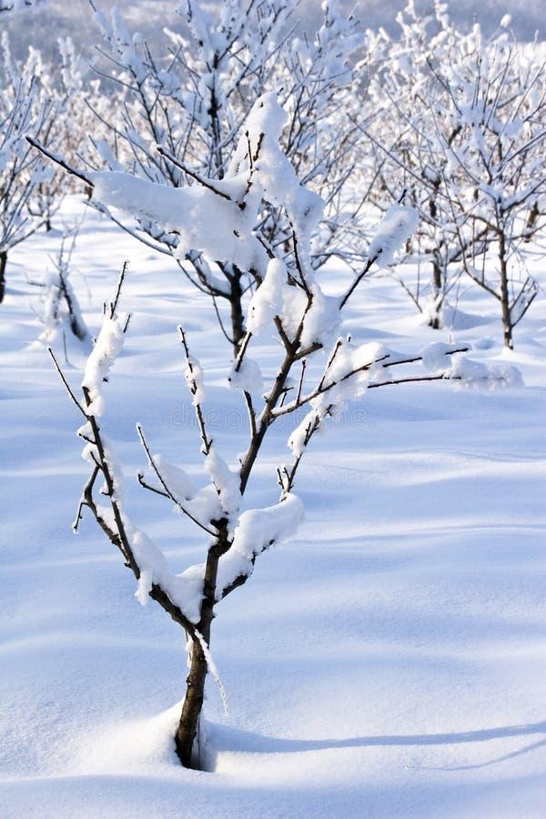 Pomar de fruta no inverno imagens de stock royalty free