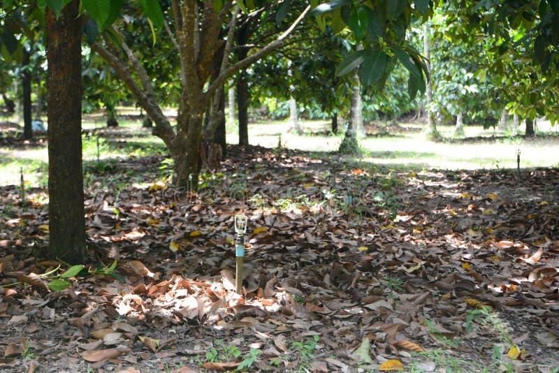 Pomar do Durian imagem de stock