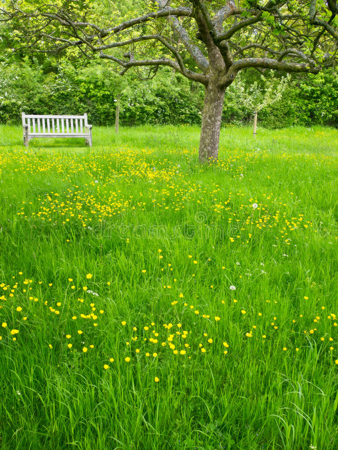 Pomar do jardim, Inglaterra fotografia de stock royalty free
