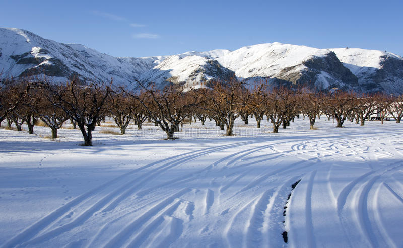 Pomar no inverno foto de stock royalty free
