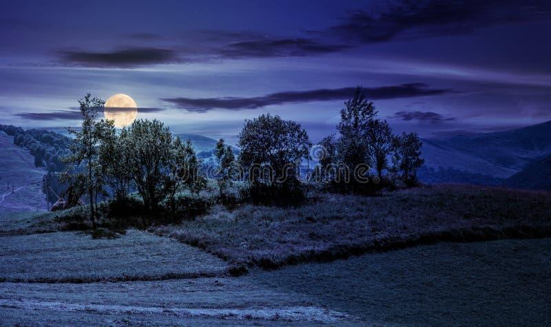 Pomar pequeno em um campo rural gramíneo na noite imagem de stock royalty free