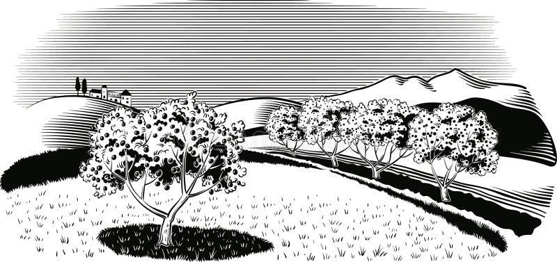 Pomar plantado com árvore de maçã ilustração royalty free