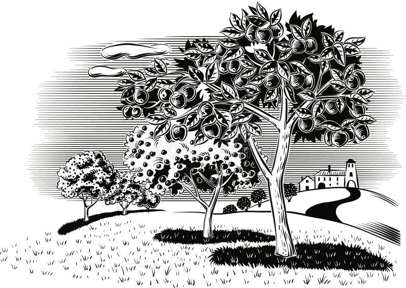 Pomar plantado com maçã ilustração royalty free