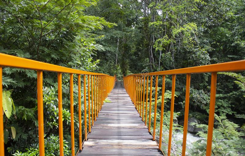 Pomarańcze most w lesie tropikalnym obraz royalty free