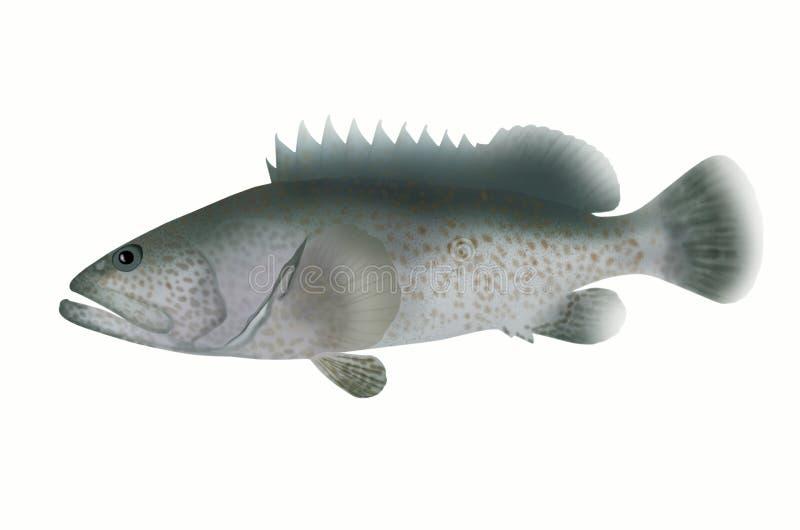 Pomarańcze łaciasty grouper fotografia royalty free