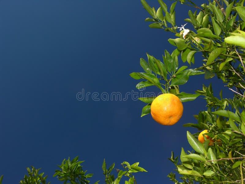 pomarańcze fotografia stock
