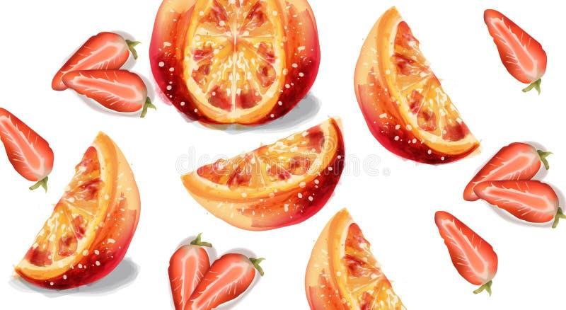 Pomarańcze i truskawki plasterków owoc wektoru akwarela ilustracji