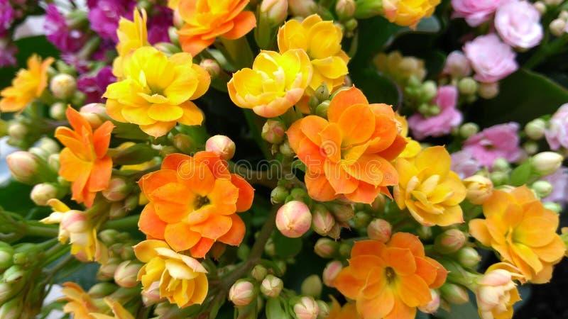 Pomarańcze i yelllow robimy was ono uśmiechać się zdjęcia royalty free
