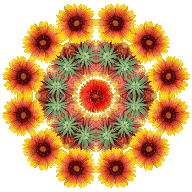 Pomarańcze kwitnie dalie ilustracji