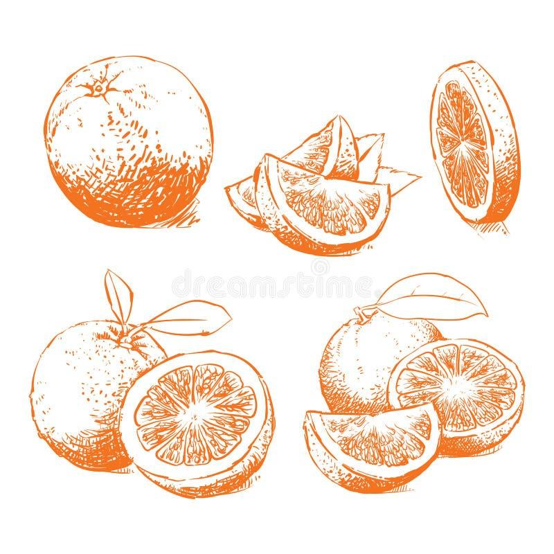 Pomarańcze Odizolowywająca, Pomarańczowy wektor Skład pomarańcze royalty ilustracja