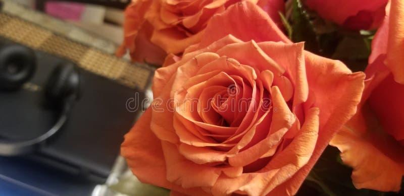 Pomarańcze róży zoom zdjęcia stock