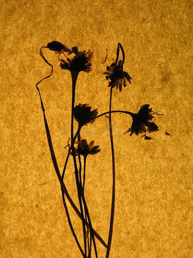 pomarańcze ręcznie księgę brown zdjęcie stock