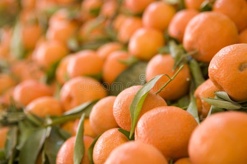 Pomarańcze stojak obraz stock