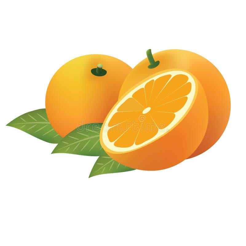 pomarańcze wektor zdjęcie royalty free