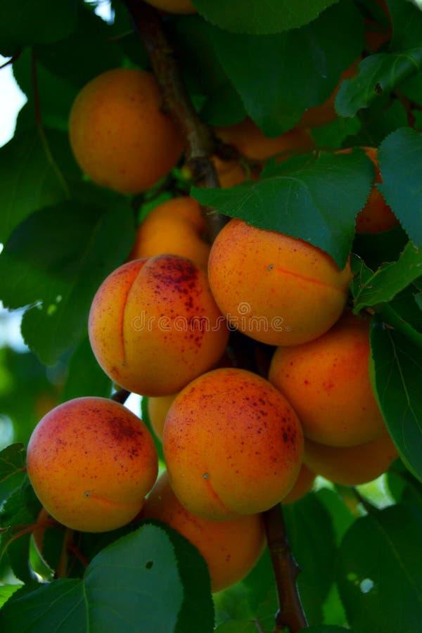 Pomarańcze yummy zdjęcie stock
